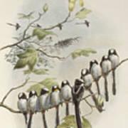 Long-tailed Tit  Art Print