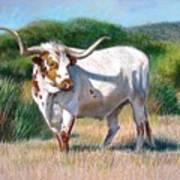 Longhorn Bull Art Print