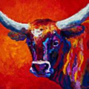 Longhorn Steer Art Print