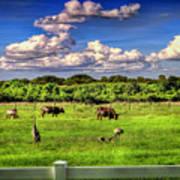 Longhorns At The Ranch Art Print