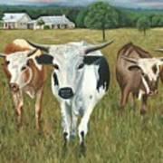 Longhorns Art Print
