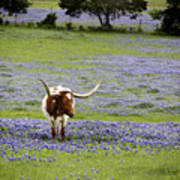 Longhorns Series No. 4 Art Print