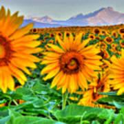 Longs Sunflowers Art Print