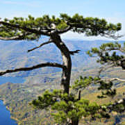 Look At The Pine Trees And The Lake Art Print