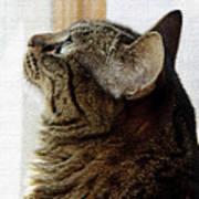 Look Out Window Tabby Cat Art Print