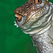 Look Reptile, Lizard Interested By Camera Art Print