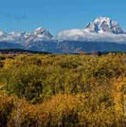 Looking Across Willow Flats To Mt Moran Art Print