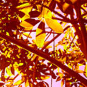 Looking Through Tree Leaves 2 Art Print