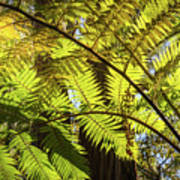 Looking Up To A Beautiful Sunglowing Fern In A Tropical Forest Art Print