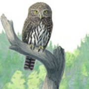 Lookout- Northern Pygmy-owl Art Print