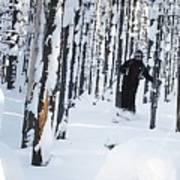Lookout Trees Art Print