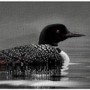 Loon Morning Art Print