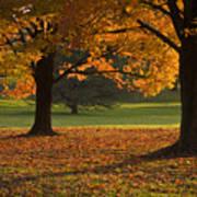 Loose Park Maple Trees Art Print by Chad Davis
