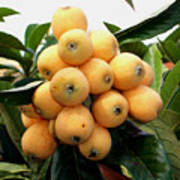 Loquat Exotic Tropical Fruit 4 Art Print