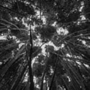 Lost Among The Bamboo Art Print