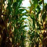 Lost In Corn Art Print