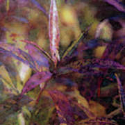 Lost Leaves Decorated In Purple 6003 Ldp_2 Art Print