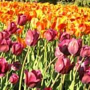 Lots Of Tulips Art Print