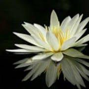 Lotus And Reflection Art Print