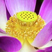 Lotus Central Detailed Art Print