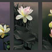 Lotus Collection II Art Print