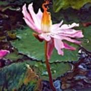Lotus Fire Art Print