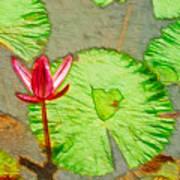 Lotus Flower Bloom In Pink 1 Art Print