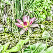 Lotus Flower Bloom In Pink 2 Art Print