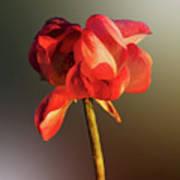 Lotus Flower Golden Glow Art Print