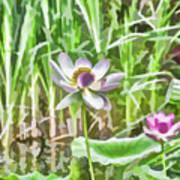 Lotus Flower On The Water Art Print