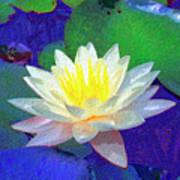 Lotus Grace Art Print
