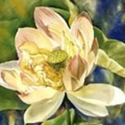 Lotus In Blooms Art Print