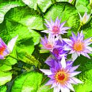 Lotus In Pond Art Print