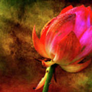 Lotus In Texture - A Present For A Friend Art Print