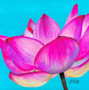 Lotus  Art Print by Laura Bell