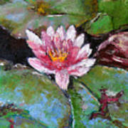 Lotus Of The Pond Art Print