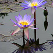 Lotus Reflection 4 Art Print