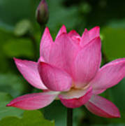 Lotus--shades Of Past And Future Dl029 Print by Gerry Gantt