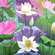 Lotus Trio Art Print
