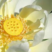 Lotus Up Close Art Print