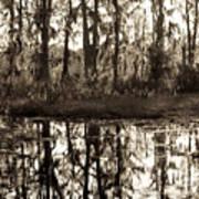 Louisiana Swamps 3 Art Print