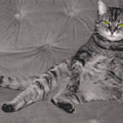 Lounge Cat Art Print