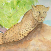 Lounging Leopard Art Print