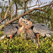 Love Birds - Great Blue Heron Art Print
