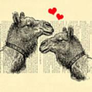 Love Camels Art Print