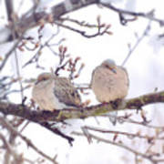 Love Is In The Air - Mourning Dove Couple Art Print