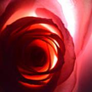 Love Me Tender As The Petals Of This Rose Art Print
