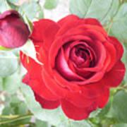 Love Roses Art Print
