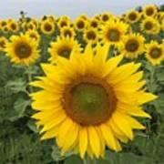 Love Sunflowers Art Print