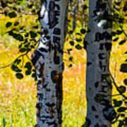 Love Trees Art Print
